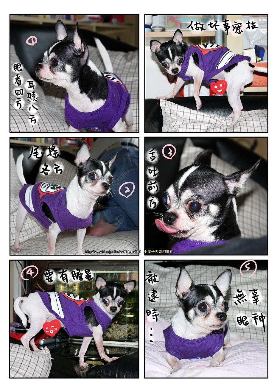 201012dog_3.jpg